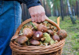 ВМолдове занеделю грибами отравились 46человек. Втом числе 11детей