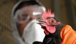 Украина сообщила овспышке птичьего гриппа. Нацагентство безопасности пищевых продуктов предупреждает…