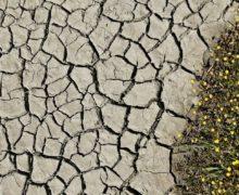 Синоптики объявили желтый код в связи с засухой