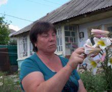 «Мы — маленькие люди и должны работать». История пенсионерки, нелегально продающей черешню и цветы в центре Кишинева