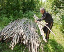 На лес золота. Как Молдова готовилась к реформам лесного сектора
