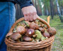ВОргеевском районе шесть человек отравились грибами. Втом числе четверо детей