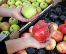 Мэрия Кишинева планирует закупить яблоки для школьников