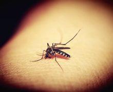 ВРумынии появились комары, переносящие вирус лихорадки Западного Нила