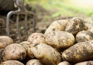 Cartoful fierbinte. Va fi un nou salt al prețurilor în Moldova?