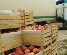 Из KLM Fruct выжимают срок. Как крупнейший поставщик яблок в Молдове попал под уголовный пресс