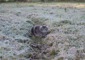 ВМолдове синоптики обещают снег впервый день весны