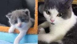 ВКитае успешно клонировали кота. Ученые объявили омассовых продажах клонов домашних…