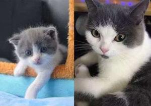ВКитае успешно клонировали кота. Ученые объявили омассовых продажах клонов домашних питомцев