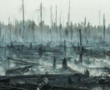 ВСибири горят леса. Площадь пожаров превысила миллион гектаров