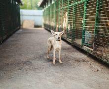 ВКишиневе ветеринары изРумынии стерилизовали 140 бездомных собак