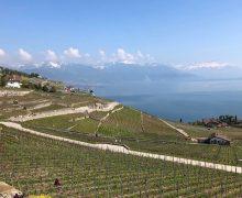 История Bessarabie. Как швейцарцы 200 лет назад стали делать в Молдове вино