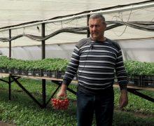 Тепличная инициатива. Как фермер из Конгаза стал выращивать овощи круглый год. Видео