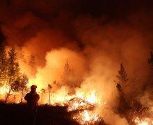 В России спасатели выяснили причину лесных пожаров