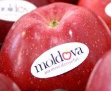 Шире фрукт. Россия запросила список молдавских экспортеров сельхозпродукции