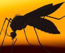 ВСША два человека умерли отконского энцефалита. Вирус переносят комары