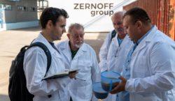 zernoff