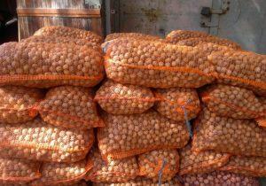 Орехи намиллионы. ВМолдове раскрыли схему контрабанды грецких орехов вЕС иРоссию