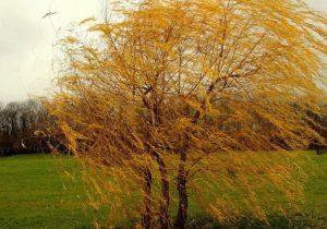 ВМолдове синоптики объявили желтый код из-за ветра