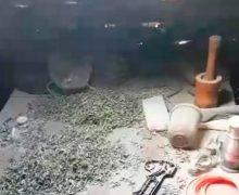 VIDEO Droguri de aproximativ 100 mii lei, confiscate de oamenii legii. Unde urmau să ajungă acestea