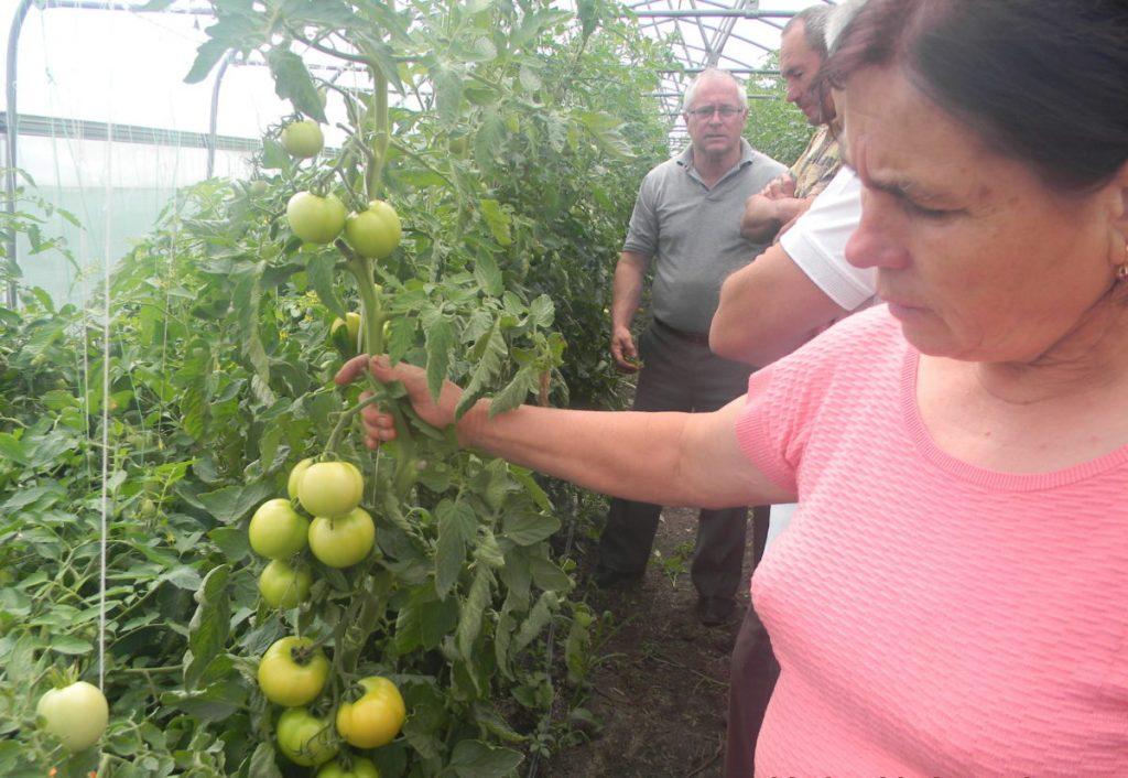 Выращенные с любовью. Как в Молдове растят экоовощи