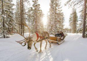 Компания недвижимости отправила своих клиентов в Лапландию!
