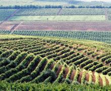 NM Espresso: почему Кишинев не отдал Платона Украине, был ли «заказ» на дело Мораря, и откуда 100 га земли у заместителя генпрокурора
