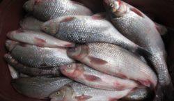 На рынке в Кишиневе продавали рыбу, занесенную в Международную красную…