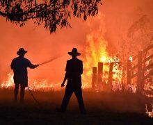 ВАвстралии из-за пожаров погибло более 1млрд животных