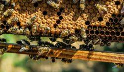 Ganea Group разворошила гагаузский улей. Почему местные пчеловоды не рады…