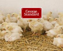 George Standard задает стандарт. Где в Молдове можно купить качественные домашние яйца и куриное мясо