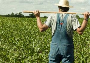 """Dodon a anunțat că guvernul așteaptă donații pentru agricultori: """"Sper foarte mult că prietenii noștri vor veni cu un suport"""""""