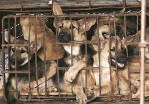 Efectul pandemiei: Un oraș din China interzice consumul câinilor și pisicilor