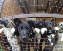 «STOP беспределу Некрополя!». ВКишиневе 1июня пройдет протест защитников животных