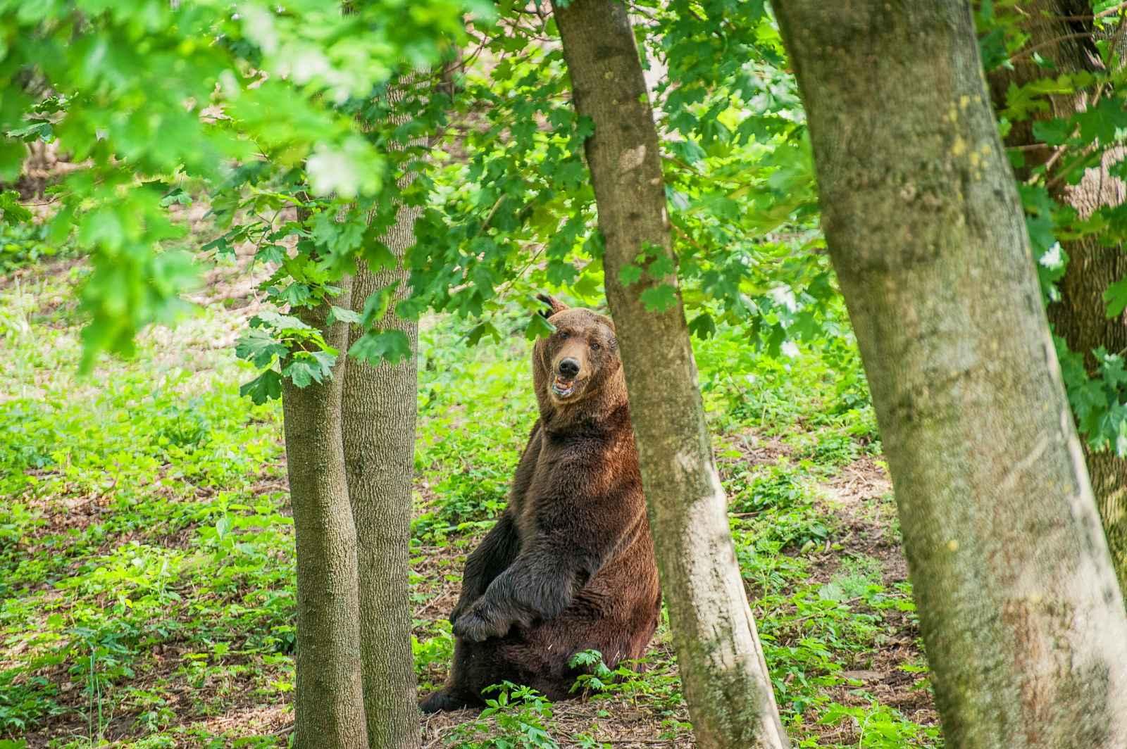 FOTO Grădina Zoologică din Chișinău își redeschide porțile de 1 iunie