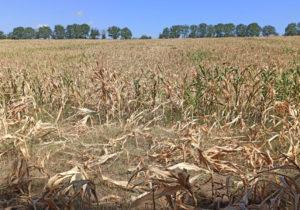 Партия «Шор»: Большие сельскохозяйственные объединения смогут эффективнее противостоять вызовам иугрозам