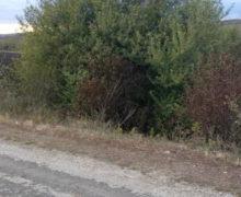 ВФалештском районе нашли мертвым пропавшего подростка (ОБНОВЛЕНО)