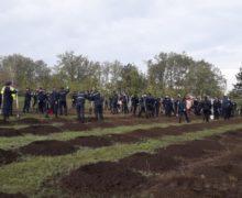 ВКишиневе посадили около 12тыс. деревьев (ВИДЕО)