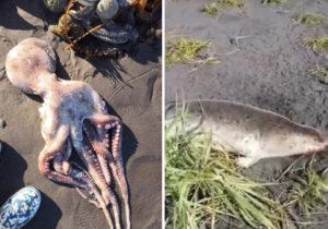 ВРоссии назвали основную версию гибели морских животных наКамчатке