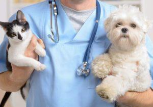 Câinii și pisicile din orașul Ialoveni pot fi sterilizate gratuit. Ce trebuie să faceți?
