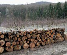 Взаповеднике Plaiul Fagului незаконно вырубают деревья? Moldsilva проведет расследование