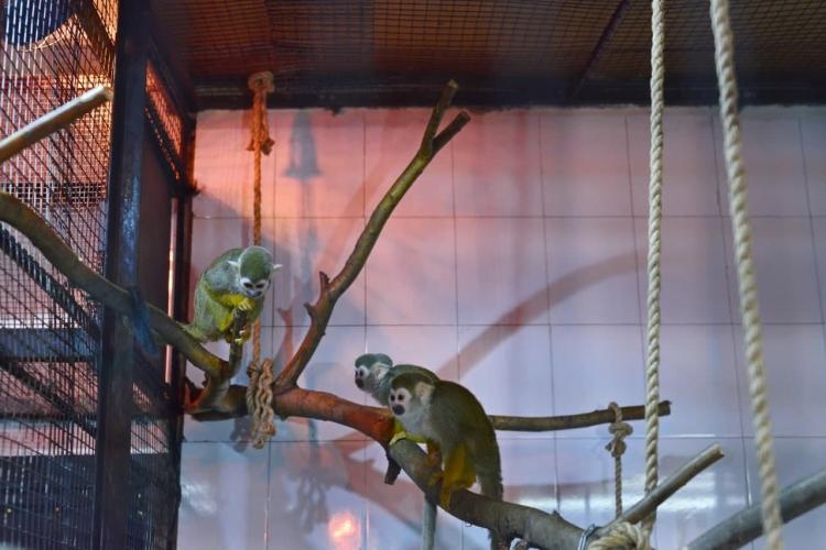 Лемуры, капибары, мары. Вкишиневский зоопарк привезли новых животных (ФОТО, ВИДЕО)