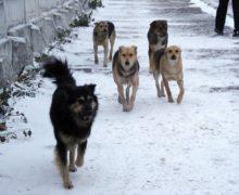 «Травить дешевле». Что делать с бродячими собаками в Кишиневе? Репортаж NM (ВИДЕО)
