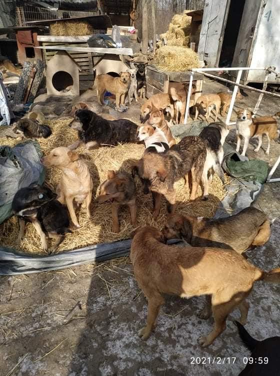 «Нам ижить недают, иумереть недают». Почему приют для собак AOVA остался без крыши над головой