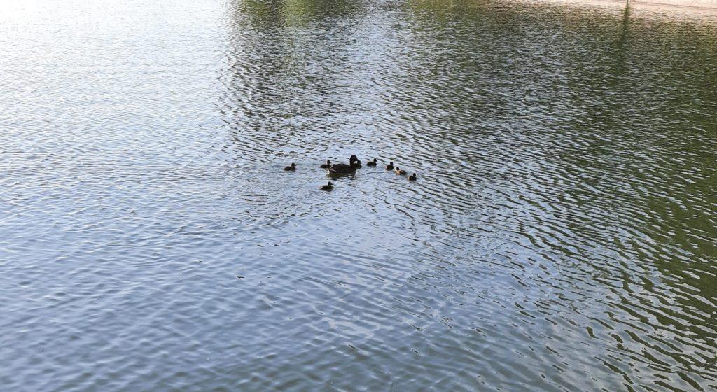 O fetiță ar fi fost la un pas de înec la lacul Valea Morilor. Trecătorul care a salvat-o era să-și piardă, la rândul său, viața (FOTO)