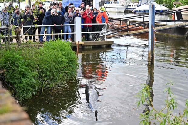 Детеныша кита, застрявшего в шлюзе Темзы, пришлось усыпить