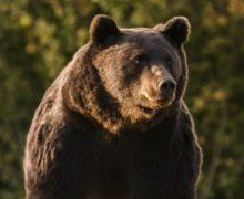 Принц Лихтенштейна отрицает обвинения вубийстве самого большого медведя вРумынии
