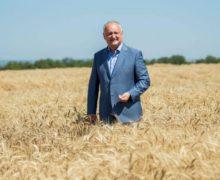 Игоря Додона нашли в пшенице. Как в скандале вокруг экспорта зерна появились «зерновые олигархи»