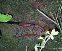 ВГлодянском районе охотник пытался скрыться отпограничников, выбросив ружье
