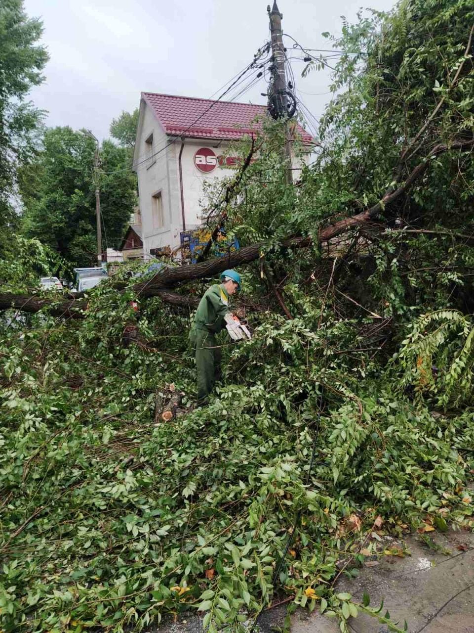 «Гдеже эти защитники природы?» Чебан отех, кто недоволен вырубкой деревьев (ФОТО)